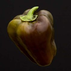 Heirloom Pepper (Sweet) 'Sweet Chocolate' Bell
