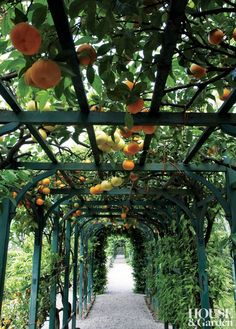 The citrus collection at Villa Carlotta on Italy's Lake Como draws guests into the shade of the pergola. #houseandgarden