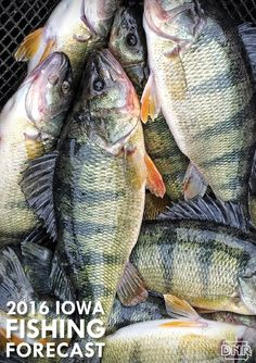 1000 images about we love spring in iowa on pinterest for Iowa dnr fishing report