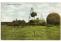 #Alfalfa Grows Big in #Kansas, #Vintage 1910s Postcard, Exaggeration Postcard, Ex, View more on the LINK: http://www.zeppy.io/product/gb/3/261638680/