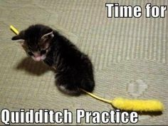 Quidditch practice >> This is so freakin' adorable it's riddikulus!
