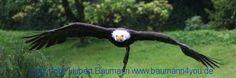 Unter Falken, Adlern und Geiern Bald Eagle, Falcons, Vulture