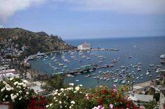 Catalina Island- Birthday means free ride from Catalina Express
