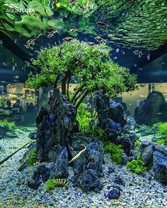 ʕ´•ᴥ•`ʔ — ronbeckdesigns: aquariumaccessories.net (via...