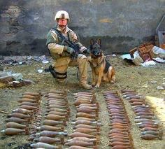 Yeah, we found a few - Military War Dogs finding bombs Military Working Dogs, Military Dogs, Police Dogs, Cop Dog, Military Quotes, Military Humor, War Dogs, My Champion, Dog Bows