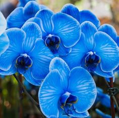 vanda orchid plant - Google Search