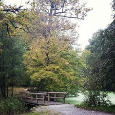 We wish you a good afternoon with this stunning pic of la #cambre forest in #brussels #bxl pic by @_maggie_bill