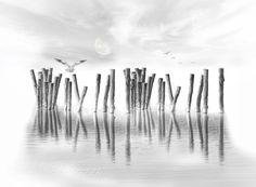 """ph. © Eve Wolf """" The silence..."""""""