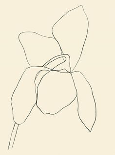 """Ellsworth Kelly : """"Cyclamen I"""" 1964 (hard-edge painting) Ellsworth Kelly, Painting Inspiration, Art Inspo, Plant Drawing, Matisse, Art Moderne, Action Painting, Oeuvre D'art, Printable Art"""