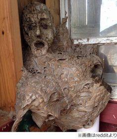 【写真】不気味すぎるスズメバチの巣、使っていなかった小屋に入ったら…。記事画像(photo2/2014-04-28-045548) | Narinari.com