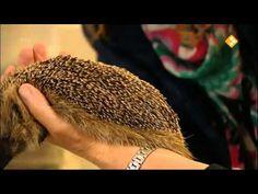 Huisje Boompje Beestje , De egel - YouTube Autumn Activities, Hedgehogs, Biology, Hedgehog