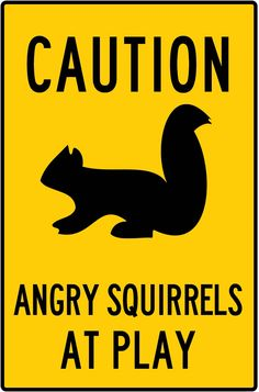 Caution! Angry Squirrels at Play www.angrysquirrelstudio.com