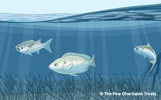 How to Protect Habitat, Homes and Nurseries for Ocean Fish