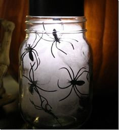 Spooky Spiders in Ja