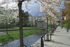 Exemple d'urbanisme vert, le quartier écologique de Hammarby Sjöstad a fleuri sur une ancienne zone industrielle située au sud de Stockholm.