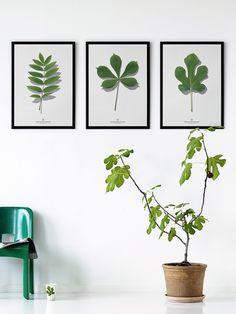Giv din bolig et botanisk touch | Boligmagasinet.dk