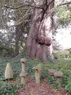 Do you see the elf in the tree?  Magical place in the woods of Adare, Ireland.