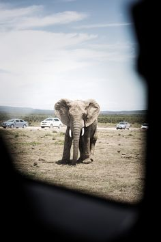 A standoff captured between mankind and nature Car Photography, Safari, My Photos, Wildlife, Elephant, Africa, Nature, Animals, Naturaleza