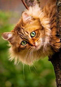 Hello kitty!! ❤️
