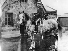 South Australia's police horses to be honored - News - Horsetalk.co.nz