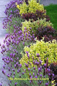 dwarf barberry, dwarf euonymous, spanish lavender...put along edge of driveway this year!