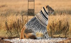 Rohan Sharad Dahotre utilizes photographs of wild animals and applies a variety of fanciful costumes