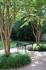Crepe myrtle underplanted with liriope . Crepe myrtle underplanted with liriope Patio Trees, Landscaping Around Trees, Front Yard Landscaping, Landscaping Ideas, Crepe Myrtle Landscaping, Pavers Ideas, Path Ideas, Brick Paver Patio, Brick Patios