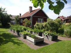 In Svezia, l'orto si fa in cassoni rialzati http://lefotodiluisella.blogspot.it/