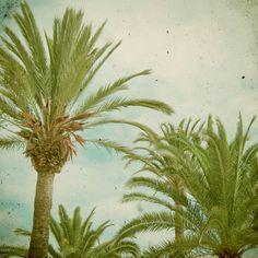#palmtrees #tropical #paradise