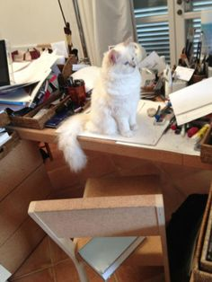 Karl Lagerfeld's Kitty Choupette Has Her Own Book! | Grazia Fashion