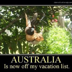 The amazing pictures of a giant spider eating a bird Australia Pictures, Australia Funny, Australia Trip, Sphynx, Spiders In Australia, Spider Eating, Meanwhile In Australia, Monsters, Animaux