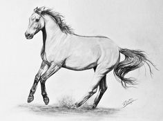 Working on a drawing of a horse right now, it's no where near as good as this, though. :D