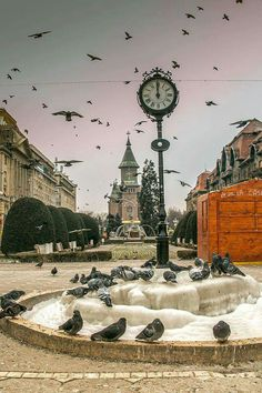 Timisoara - Piata Victoriei (Operei)   foto Alex Zarin