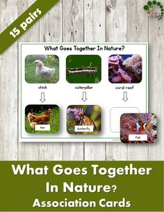 What Goes Together in Nature? Association Cards - Montessori printable for children ages It is a perfect addition to your Nature Corner. Montessori Homeschool, Montessori Toddler, Montessori Activities, Hands On Activities, Preschool Activities, Homeschooling, Honey Bee Life Cycle, Lacing Cards, Inspired Learning