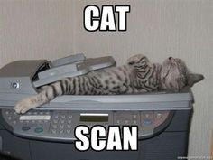 "I don't remember learning about ""cat"" scans in our anatomy and physiology course... http://www.straighterline.com/college-courses/anatomy-physiology-i.cfm"
