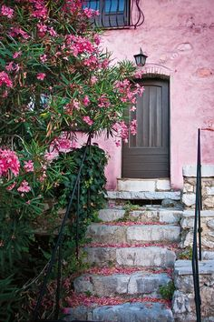 Pink oleander and a house with pink walls in St-Paul-de-Vence in Alpes-Maritimes, between Provence and the French Riviera, France