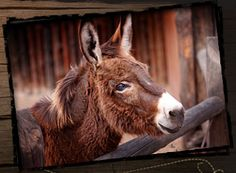 Rescued Donkey...Great cause, help save these wonderful creatures!   http://donkeyrescue.donordrive.com/