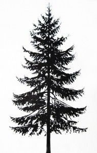 evergreen trees drawing - Google Search