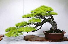 Cascading style bonsai