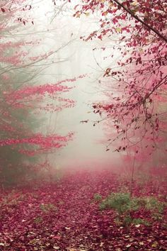 Autumn Path, The Enchanted Wood -- photo: Lin Amadeus Beautiful World, Beautiful Places, Beautiful Forest, Enchanted Wood, All Nature, Pink Nature, Belle Photo, Pretty Pictures, Amazing Photos