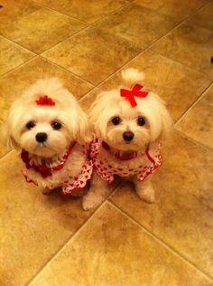 Valentines twins
