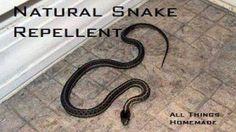All Natural Snake Repellent jaimesrecipes.com