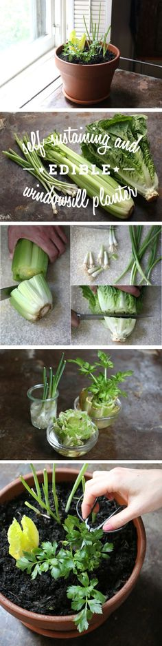 Plant your edible goodies in a window planter, and you can snip off what you need for salads and cooking and then watch them magically regrow. http://www.ehow.com/ehow-home/blog/no-garden-no-problem-create-a-self-sustaining-decorative-and-edible-windowsill-planter/?utm_source=pinterest.com&utm_medium=referral&utm_content=blog&utm_campaign=fanpage