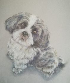 Art Gallery Jose | Paintings and Drawings Pastel Drawing, Painting & Drawing, Animal Drawings, Art Gallery, Dogs, Animals, Fictional Characters, Animales, Art Museum