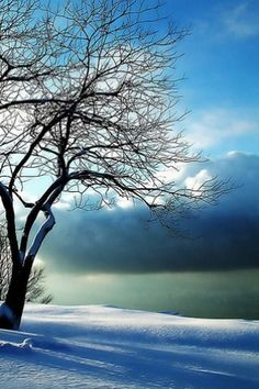 <3 Stunning Vision of All The Things I Find Beautiful on This Earth -=- Snow, Sun, Trees & Blue Skies !! <3