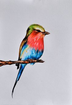 Original Colored Pencil Drawing, Bird Painting, Bird Art 8x11 Inch