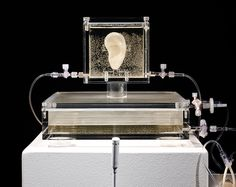 artist has grown van gogh's ear with DNA and a 3D printer