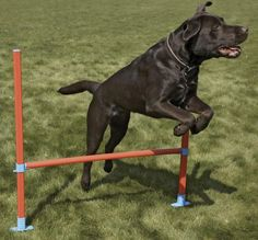 Agility Fun Jump Lixit ( - Pet Equipment Supplies - Pet Training - Accessories)
