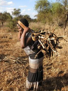 [Massai Gemeinschaft]: Der Feuerholz Vorrat wird aufgestockt, damit bald wieder gekocht werden kann. SOCIALTOURIST - Urlaub mit sozialer Verantwortung - Kenia - Kenya