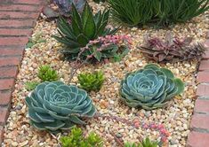 Includes: sample succulent garden plan, before installing your succulent landscape, design features to consider, soft landscaping with succulents, and succulent landscaping tips. Succulent Rock Garden, Succulent Landscaping, Succulent Gardening, Landscaping With Rocks, Garden Stones, Garden Landscaping, Landscaping Tips, Arizona Landscaping, Rockery Garden